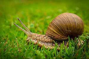 Snails have 15,000-50,000 Teeth